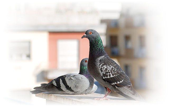 1418891283 piccioni